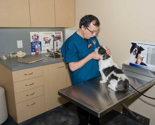 West Coast Veterinary Dental Services Dr. Legendre with patient in the exam room